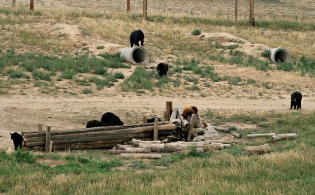 5 Lots of Bears