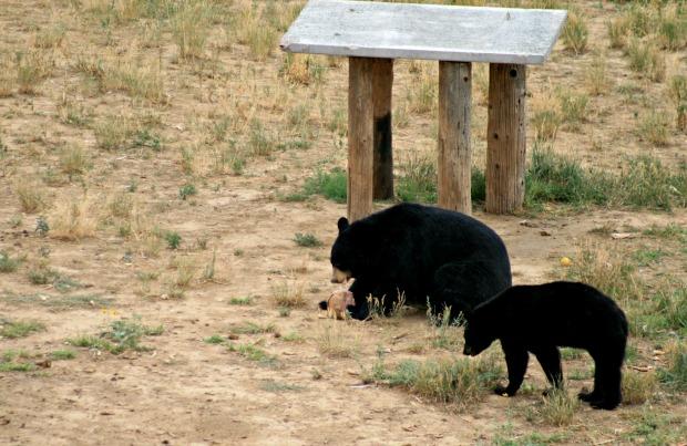6 - Bear Food