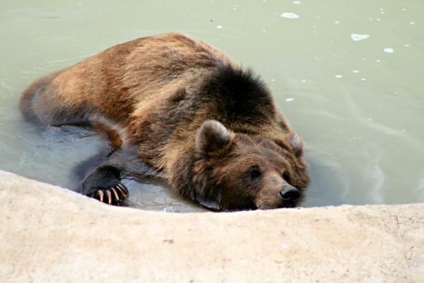 8 Bear Bath